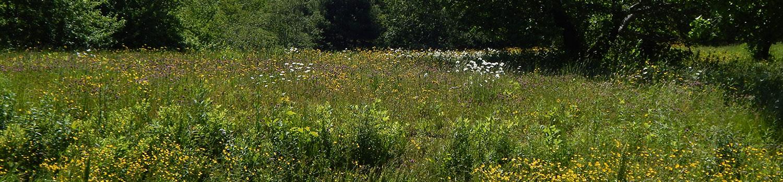 Return of the Meadow