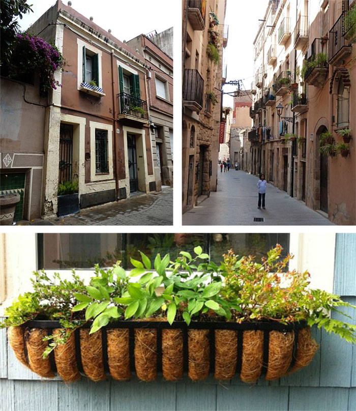 Window boxes in Barcelona