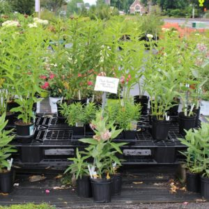 Plants at a nursery