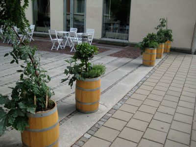 "Summer squash, tomatoes, and other edibles in ""cask""-style planters define the public edge of this outdoor cafe seating area."