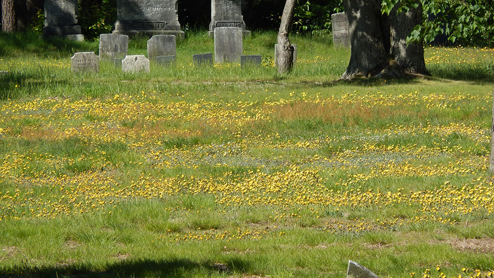 Other Portland locations feature open grassy areas with meadow wildflowers.