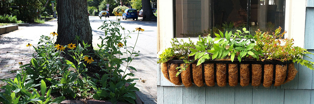 Add native plantings along the sidewalk, such as this planting of black-eyed coneflower. Window boxes and pots are great additions too.