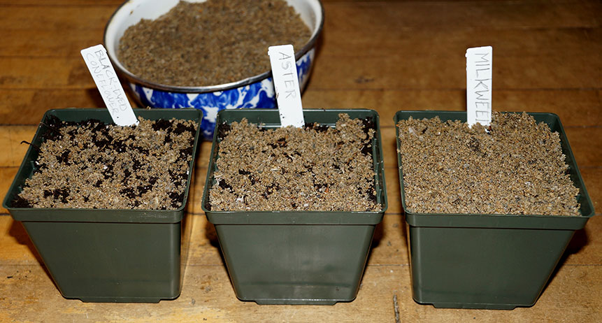 Three pots planted with soil, seeds and sand