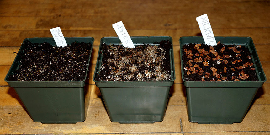 Three types of seeds in pots