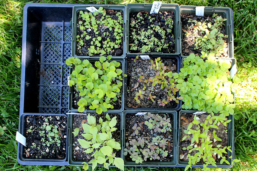 Germinated Seeds