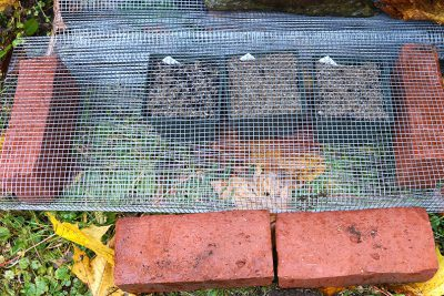 Pots outside, under screen