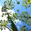 NATIVE GREENS: Grow these delicious edible vegetables in your own back yard