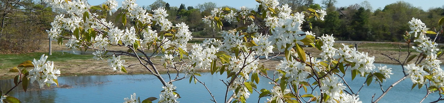 Small flowering trees a dozen native species for limited spaces small flowering trees a dozen native species for limited spaces mightylinksfo
