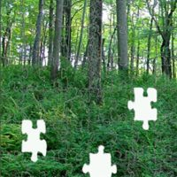Forest with missing pieces