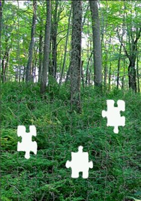 59e0467068b Invasive Plants and Maine s Ecological Puzzle – Wild Seed Project