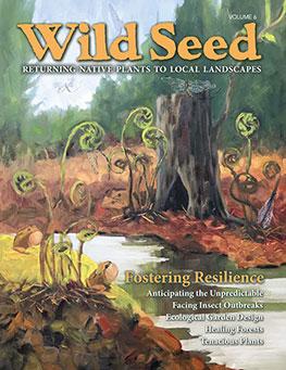Order Wild Seed Volume 6 now