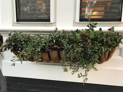 You don't need land of your own to be a rewilder! Adopt a street tree to care for, tend a sidewalk hellstrip, display native containers on your stoop, plant a window box with natives.
