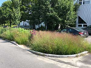 Photograph of grasses and trees in a parking lot.