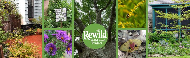 Rewild splice Copyright Lisa Looke